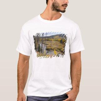 Provo flod- och aspenträd 5 tee