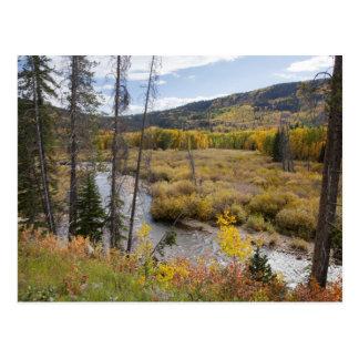 Provo flod- och aspenträd 5 vykort