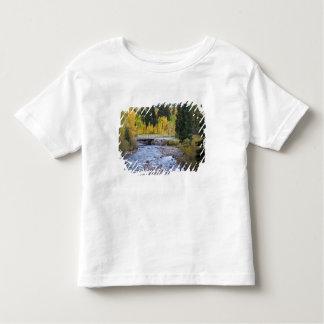 Provo flod- och aspenträd 8 t shirts