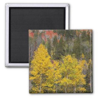 Provo flod- och aspenträd 9 magnet