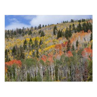 Provo flod- och aspenträd vykort