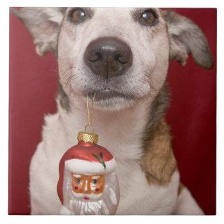 Prydnad för jul för jackRussell Terrier hållande Kakelplatta