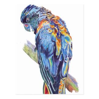 Psychedelic papegojaaustralierkakadua vykort