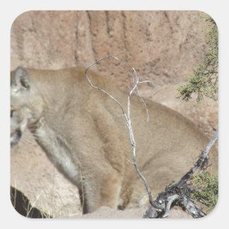 Puma Fyrkantigt Klistermärke