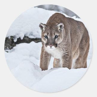 Puma i snön runt klistermärke