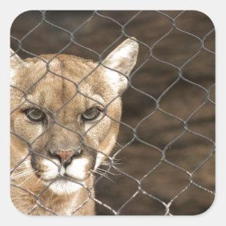 Puma… med inställning! fyrkantigt klistermärke