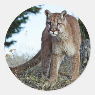Puma på berg runt klistermärke