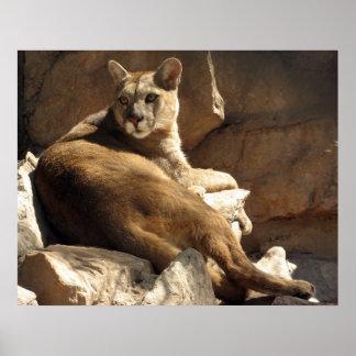 Puma på stenarna poster