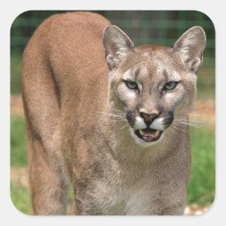 Puma puma fyrkantigt klistermärke