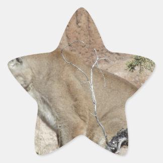 Puma Stjärnformat Klistermärke