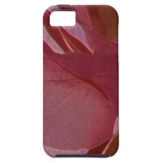 pund-Bougainvillea iPhone 5 Cases