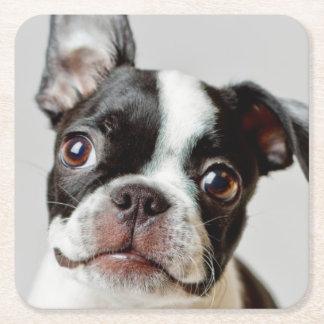 Puppy. för Boston Terrierhund Underlägg Papper Kvadrat