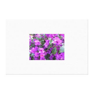 Purpurfärgad Bougainvillea slågen in kanfas Canvastryck