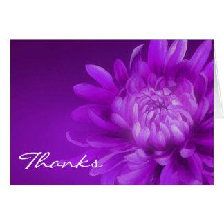 """Purpurfärgad chrysanthemum för tack """"kort för OBS kort"""