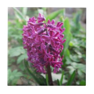 purpurfärgad hyacintvårblomma kakelplatta
