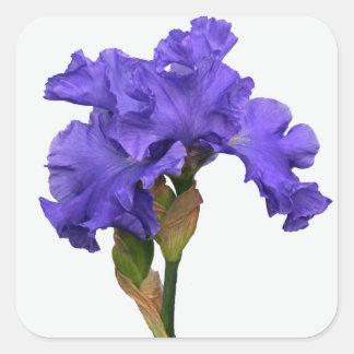 Purpurfärgad Iris Fyrkantigt Klistermärke