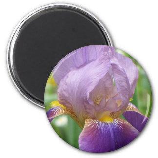 Purpurfärgad Iris Magnet