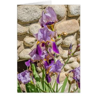 Purpurfärgad Iris; Mors dag; Födelsedag; Få väl Hälsningskort