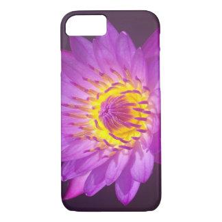 Purpurfärgad lotusblommablomma