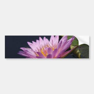 Purpurfärgad lotusblommanäckros bildekal