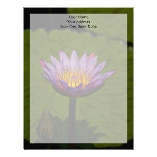 Purpurfärgad lotusblommanäckrosblomma brevhuvud