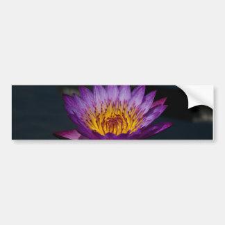 Purpurfärgad lotusblommanäckrosslända bildekal