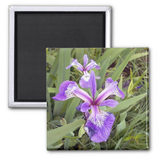 Purpurfärgad magnet för Iris 2