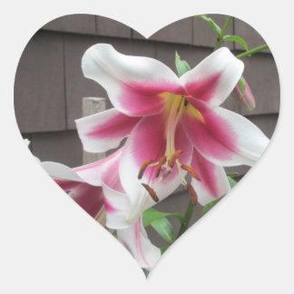 Purpurfärgad stor växt för liljavit hjärtformat klistermärke