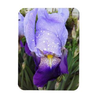 Purpurfärgad tysk Iris med några Raindrops Magnet