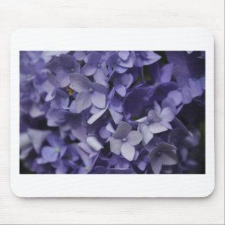 Purpurfärgad vanlig hortensia musmatta