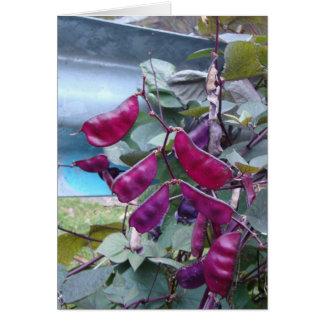 Purpurfärgade bönor hälsningskort