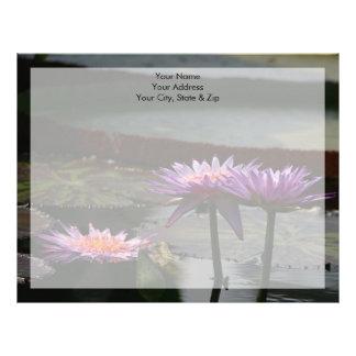Purpurfärgade lotusblommanäckrosblommor brevhuvud