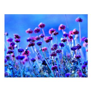 Purpurfärgade och rosa vildblommar vykort