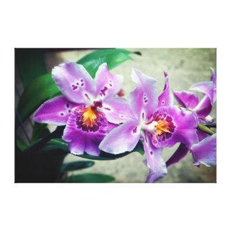 Purpurfärgade Orchids slogg in kanvastrycket Canvastryck