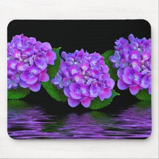 Purpurfärgade vanlig hortensia musmatta