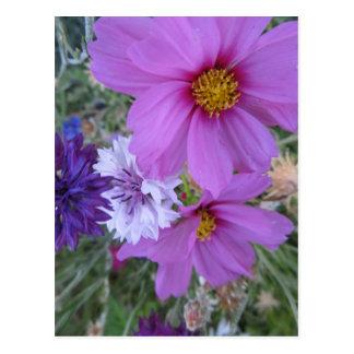 purpurfärgade vildblommar vykort