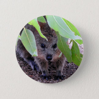 Quokka emblem standard knapp rund 5.7 cm