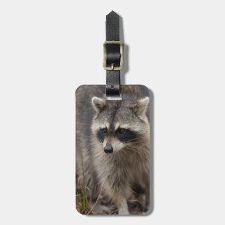Raccoon Procyonlotor, Florida, USA 1 Bagagebricka