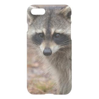 Raccoon Procyonlotor, Florida, USA 3 iPhone 7 Skal