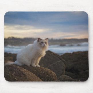 Ragdoll katt på stranden musmatta