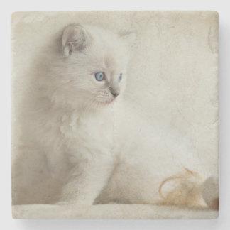 Ragdoll kattunge stenunderlägg
