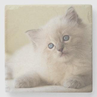 Ragdoll kattunge underlägg sten