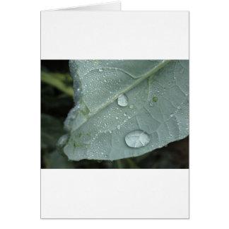 Raindrops på blomkållöv hälsningskort