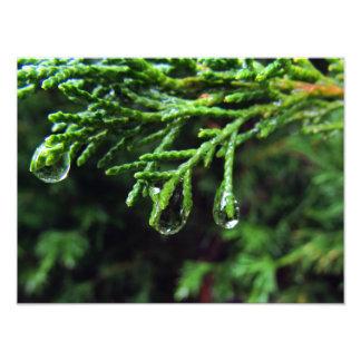 Raindrops på en trädgren (#2) fototryck