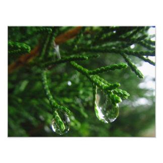 Raindrops på en trädgren fototryck