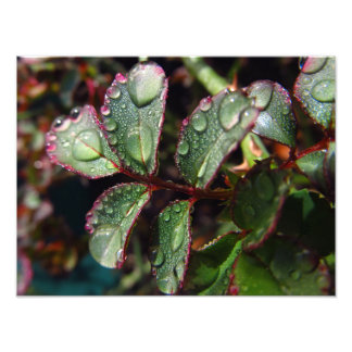 Raindrops på rosa trädlöv fototryck
