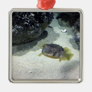 Randig Burrfish Silverfärgad Fyrkantigt Julgransprydnad