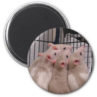 Råttor Magnet