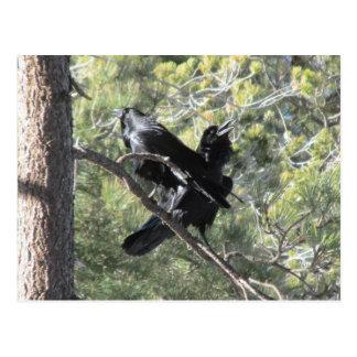 Ravens som talar på berg vykort