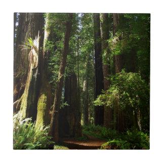 Redwoodträd och Ferns på redwoodträdnationalparken Kakelplatta